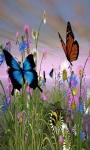 Find Differences Butterflies screenshot 4/4