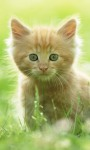 Cute Cats Pictures HD Wallpaper screenshot 2/6