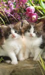 Cute Cats Pictures HD Wallpaper screenshot 4/6