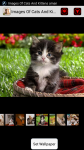 Images Of Cats And Kittens screenshot 1/4