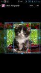 Images Of Cats And Kittens screenshot 3/4