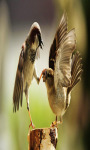 Birds Live  Wallpapers screenshot 2/4