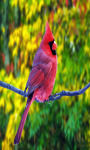 Birds Live  Wallpapers screenshot 3/4