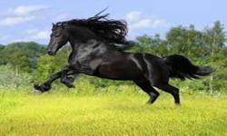 cool horse wallpaper screenshot 4/6