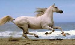 cool horse wallpaper screenshot 5/6