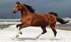 cool horse wallpaper screenshot 6/6