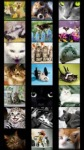 Cats Wallpapers by Nisavac Wallpapers screenshot 2/5