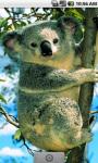 Koala Live Wallpaper screenshot 1/4