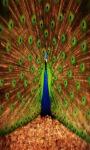 Peacock Peafowl Live Wallpaper Free screenshot 2/4