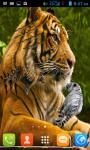 Tiger Live Wallpaper Free screenshot 1/5