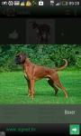 Top dogs screenshot 4/6