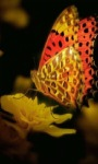 Golden Butterfly Live Wallpaper screenshot 1/3