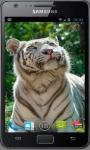 White Tiger Wallpapers screenshot 4/6