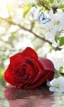 Red Rose Butterfly LWP screenshot 3/3