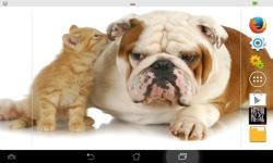 Puppies VS Kittens screenshot 1/6