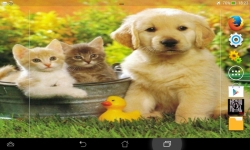 Puppies VS Kittens screenshot 2/6