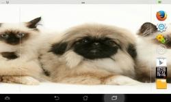 Puppies VS Kittens screenshot 3/6