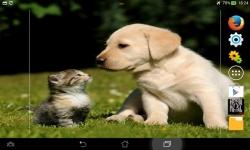 Puppies VS Kittens screenshot 5/6