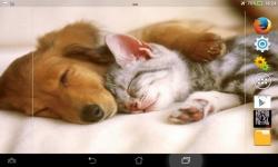 Puppies VS Kittens screenshot 6/6