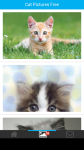 Cat Pictures Free screenshot 2/6