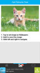 Cat Pictures Free screenshot 3/6