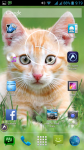 Cat Pictures Free screenshot 6/6