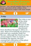 Beautiful Flowers in The World screenshot 3/3