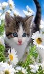 Flower Cat Live Wallpaper screenshot 2/3