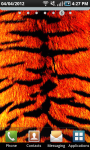 Tiger Print LWP screenshot 2/2