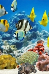 Fish Farm screenshot 1/1