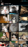 Funny Cat Wallpapers HD screenshot 2/5