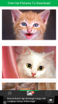 Free Cat Pictures To Download screenshot 2/6