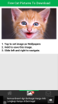 Free Cat Pictures To Download screenshot 3/6