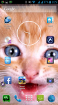 Free Cat Pictures To Download screenshot 6/6