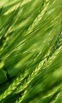 Galaxy S4 Green Leaf LWP HD screenshot 1/4