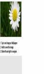 Daisy flower below Wallpaper HD screenshot 2/3