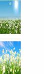 Daisy flower below Wallpaper HD screenshot 3/3