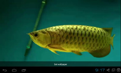 Gold Arowana Live Wallpaper screenshot 2/5