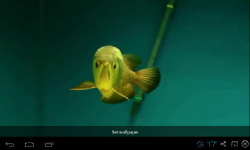 Gold Arowana Live Wallpaper screenshot 3/5