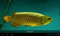 Gold Arowana Live Wallpaper screenshot 4/5