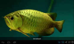 Gold Arowana Live Wallpaper screenshot 5/5