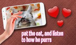 Pat Cute Kitten screenshot 3/3