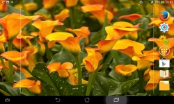 Unique Flowers Live screenshot 5/6