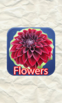 Flowers Quizes screenshot 1/6