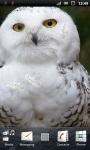 White Snowy Owl Live Wallpaper screenshot 1/3