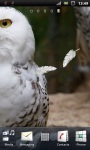White Snowy Owl Live Wallpaper screenshot 3/3