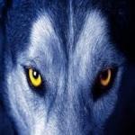 Wolf Wallpaper Gallery screenshot 1/1