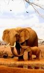 Elephants Live Wallpape screenshot 3/3