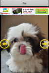 Funny Puppy Puzzle screenshot 1/6