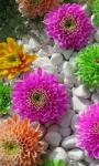 Beautiful Exotic Flowers images HD Wallpaper screenshot 4/6